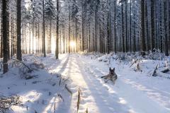 Zimný strážca