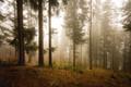 V hmlistom lese