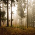 Poobednajšie hmly