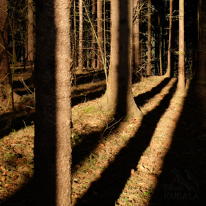 Cesty tieňom...