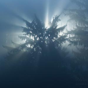 Z duše lesa...
