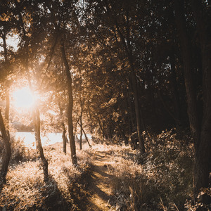 Prechádzka lesom