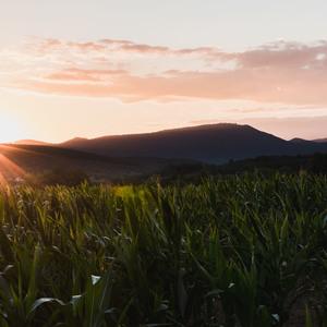 Kukuričné západy slnka