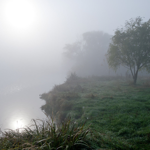 Hmla nad rybníkom