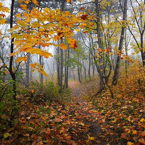 Jesenná prechádzková