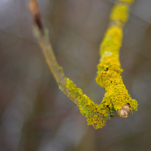 Úkaz z listového stromčeka