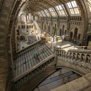 Prírodovedné múzeum Londýn