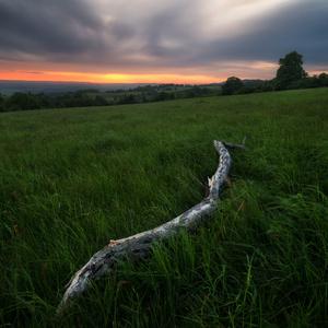 Dřevěný had