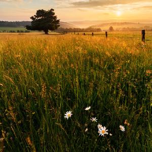 Pastviny u Stránské