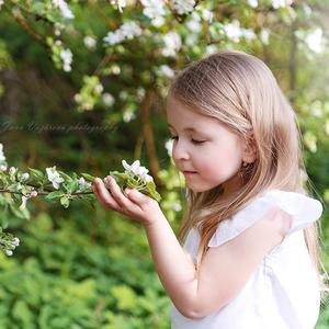 Vôňa kvitnúcej jablone
