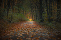 Jesenný koberec Karpatami