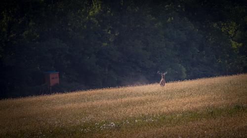 A zasa jeleň a zasa sa mi otočil chrbtom :-)