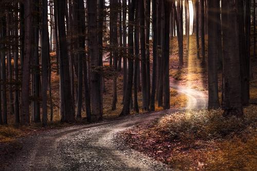 Cestička na Kršlenicu
