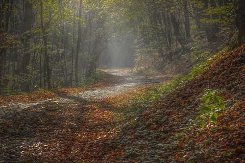 Jesenná Mokrá dolina