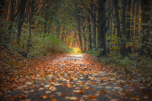 Jesenná cesta do Mokrej doliny