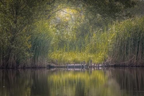 Rybník pod Plaveckým Petrom