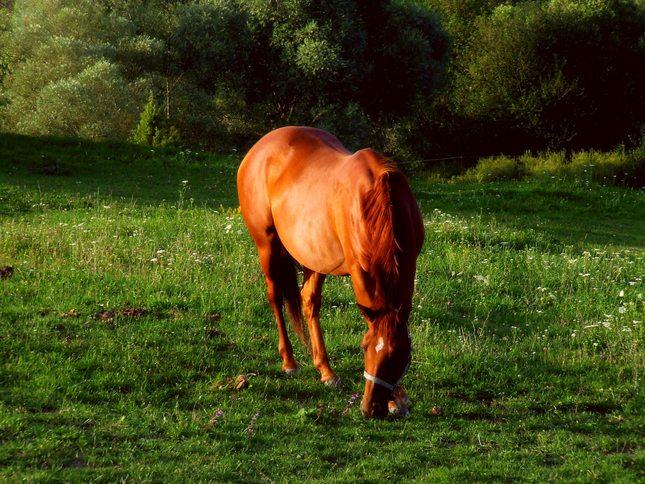 """""""Gaštanový kôň"""""""