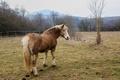 Momentka koňa