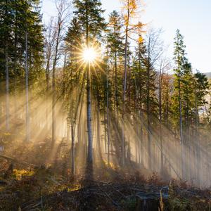 Lúče pre tanec lesných víl...