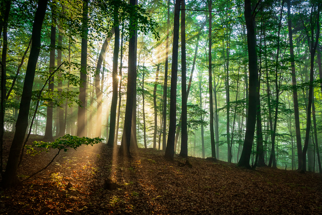 Raňajšie lúče nového dňa (2)...