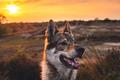 Ako upravujem západovky so psom (video)