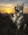 Slnko na dlani