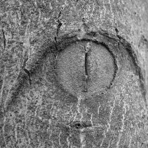 Mačacie oko