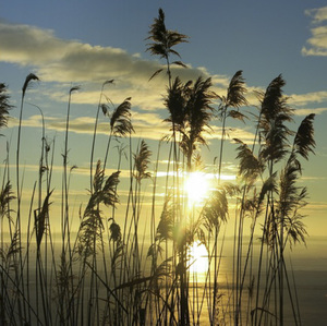 Východ Slnka pri Čunove