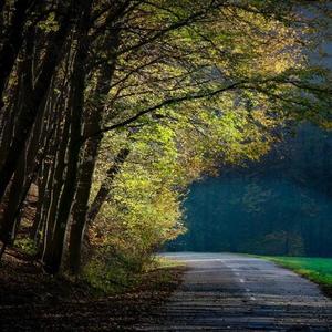 Jemná jesenná hmla