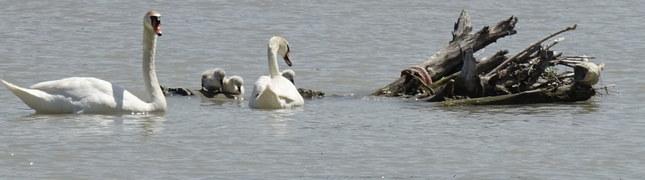Labute na Dunaji...
