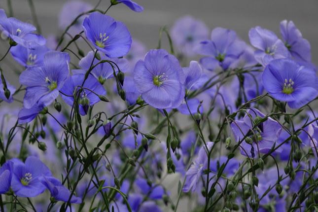Modro-fialové...