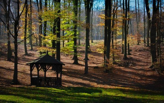 Osamotený altánok pri lese