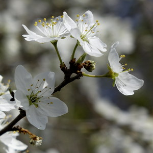 Konečne je jar tu...