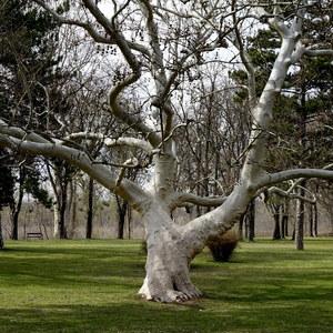 V Parku v mestečku Altenberg...