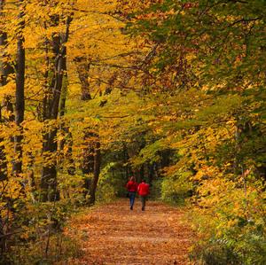 Cestička v lese