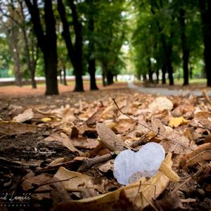 Fotka v prírode