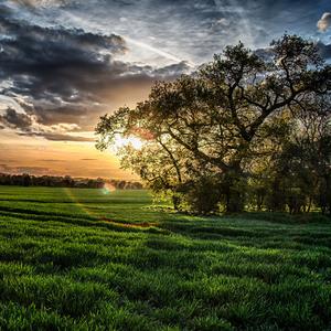 Strom, pole, slnko