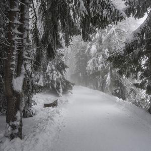 Zimna prechadzka