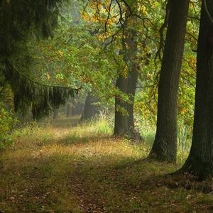 Podzimní cesty