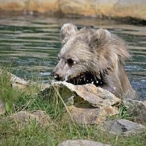 Medvěd junior