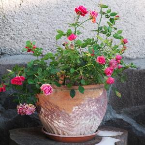 Kvetník
