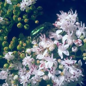 Kvety a zelený chrobák