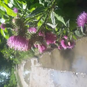 Kvety a voda