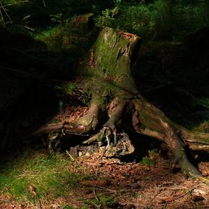 Les - zátišie 5