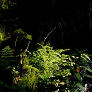 Les - zátišie 1