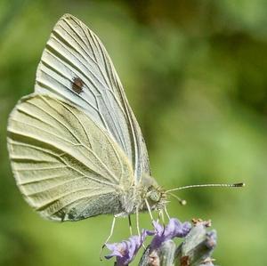 Na lúke - motýlik 6