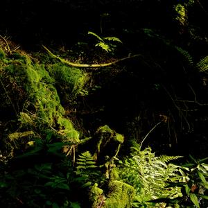 Les - zátišie 2