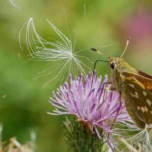 Na lúke - motýlik 3