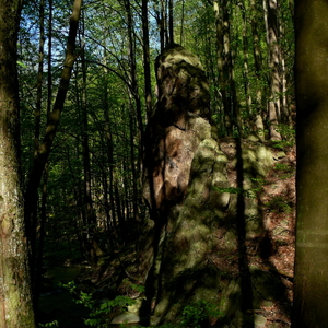 Les - zátišie 24