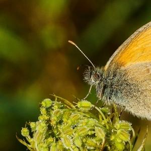 Na lúke - motýlik 4